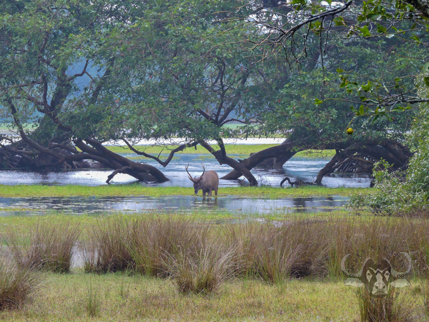 Willpattu national park