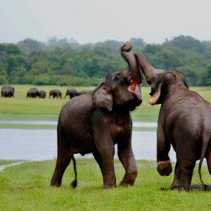Kaudulla Srilanka