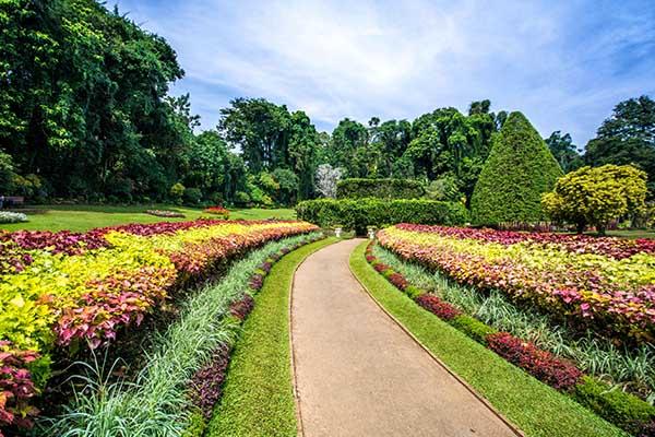 Peradeniya botnical garden
