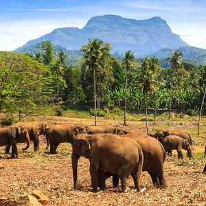 Wildlife Tour of Sri Lanka